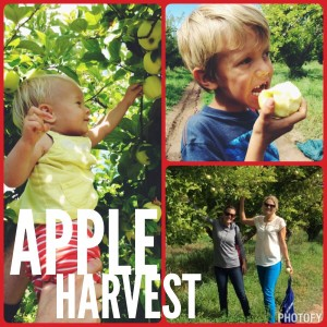 Healthy Mountain Mom Apple Trip