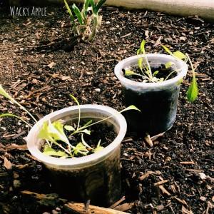 Garden starter